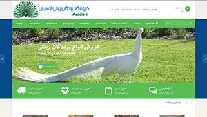 طراحی فروشگاه اینترنتی پرندگان زینتی